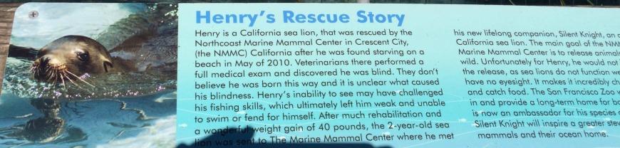 henry sea lion